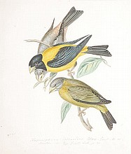 Circle of William Hayes. Ornithological studies.