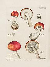 Schaeffer (Jacob Christian) - Fungorum qui in Bavaria et Palatinatu circa Ratisbonam nascuntur icones nativis coloribus expressae,