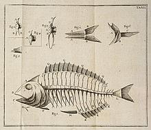 Meidinger (Karl von) - Geschichte der Fische,