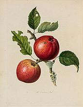 Knight (Thomas Andrew) - Pomona Herefordiensis, containing Coloured Engravings of the Old Cider and Perry Fruits of