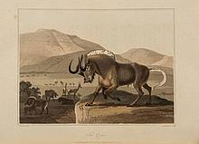 Africa.- Barrow (John) - Travels into the Interior of Southern Africa,