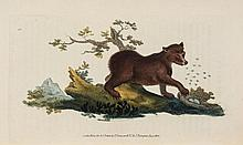 Donovan (Edward) - The Natural History of British Quadrupeds,