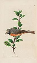 Sweet (Robert) - The British Warblers. An Account of the Genus Sylvia,