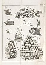 Bees.- [Bazin (Giles Augustin)] - The Natural History of Bees. Containing an Account of their...