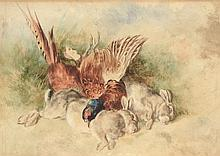 Heywood Hardy (1842-1933) - Still life with two hares and a pheasant