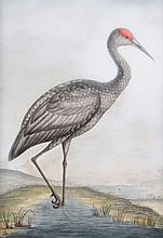 Attributed to William Hayes (1729-1799) - A pair of George III embossed watercolours of a Common Spoonbill, and a Sandhill Crane