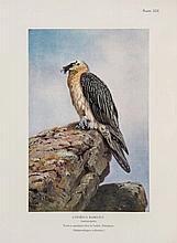 Col. R.Meinertzhagen. Nicoll's Birds of Egypt , edited by Meinertzhagen, 2 vol