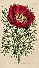 Curtis (William) - The Botanical Magazine; Or Flower-Garden Displayed,
