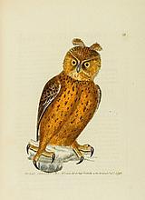 Lewin (William) - The Birds of Great Britain,