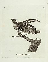 [Pennant (Thomas)] - Genera of Birds,
