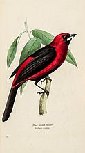 Swainson (William) - A Selection of the Birds of Brazil and Mexico,
