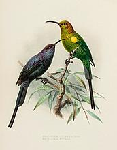 Shelley (George Ernest) - A Monograph of the Nectariniidae, or Family of Sun-birds,
