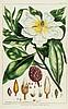 Miller (Philip) - The Gardener's and Botanist's Dictionary,