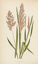 Lowe (Edward Joseph) - A Natural History of British Grasses,