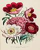 Loudon (Jane) - The Ladies' Flower-Garden of Ornamental Annuals,