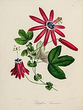 Knowles (George Beauchamp) & Frederick Westcott. - The Floral Cabinet and Magazine of Exotic Botany,