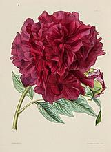and Sir Joseph Paxton. Paxton's Flower Garden, vol