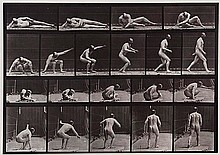 Eadweard Muybridge (1830-1904). Arising from the