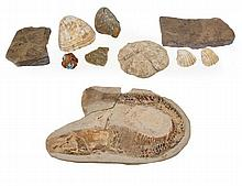 A collection of fossils and mineral specimens,