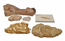 A collection of prehistoric fossil specimens,