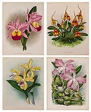 Linden (Jean Jules) - A good group of 20 plates of Orchids for the Lindenia,