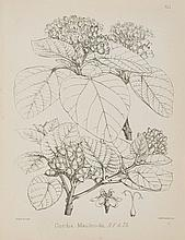 Stewart (J.Lindsay) and Dietrich Brandis. - The Forest Flora of North-West and Central India...