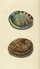 Donovan (Edward) - The Natural History of British Shells,