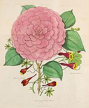 Harrison (Joseph) - The Floricultural Cabinet, and Florists' Magazine,