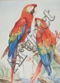 Edward Julius Detmold (1883-1957) Two macaws