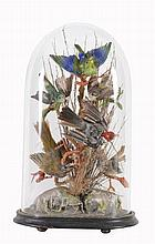 A group of preserved and mounted birds, including a grey and white cardinal...