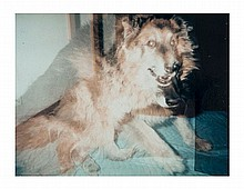 Paul McCarthy (b. 1945) Dog, 2000 polaroid signed,