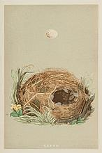 A Natural History of the Nests and Eggs of British