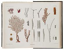 Coppinger (Richard William), - Richard Bowdler Sharpe and others. Report on the Zoological...