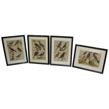 Set of 4 Antique Bird Prints