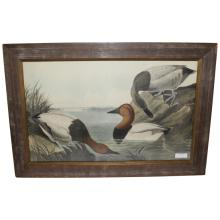 Canvas Backed Duck by John Audubon Lithograph.