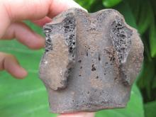 Black petrified vertebra fossil, 64.7g