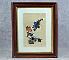 Prideaux John Selby Ornithological Etching