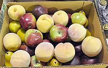 Bx Realistic Plastic Fruit