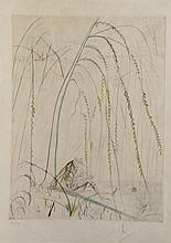 Dali Les Amours Cassandre Weeping Willow Hand Sig Dali Archives Certified