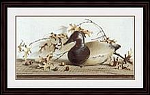 CHESAPEAKE BAY CANVASBACK BY PAULINE EBLE CAMPANELLI