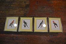 (4) Parrot Prints