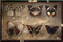 A collection of butterflies (1) Italy, 20th Century