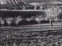 MarioGiacomelli(Senigallia 1925 - Senigallia 2000) A Silvia (To Silvia),1975, photographic print