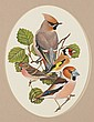 RICHARD MILLINGTON (ENGLAND) FINCHES Signed upper