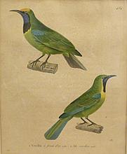 PRÊTRE - HÜET, 19 >. Lot de trois planches ornithologiques,