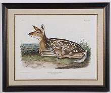 Circa 1845 framed Audubon lilthograph