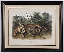 Circa 1846 framed Audubon lilthograph