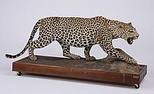 Vintage leopard full body mount