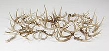 (24) Naturally shed deer antlers