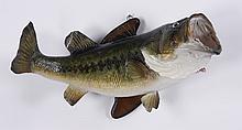 Largemouth bass mount